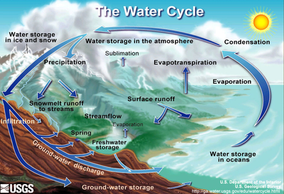 The water cycle: key to a viable terrestrial planet